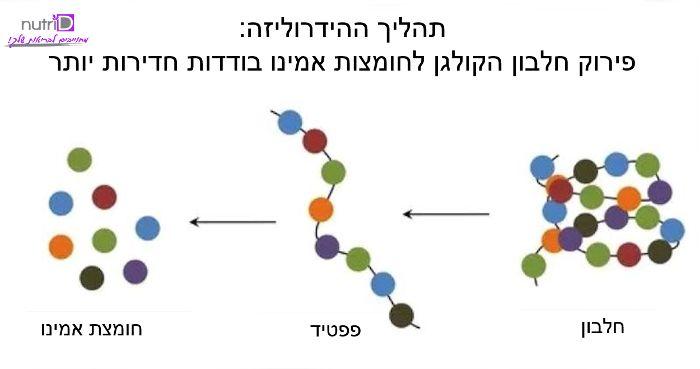 תהליך ההידרוליזה